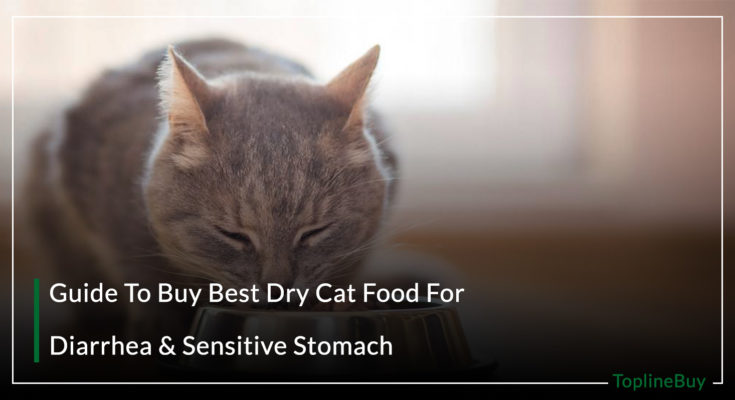 Guide To Buy Best Dry Cat Food For Diarrhea & Sensitive Stomach